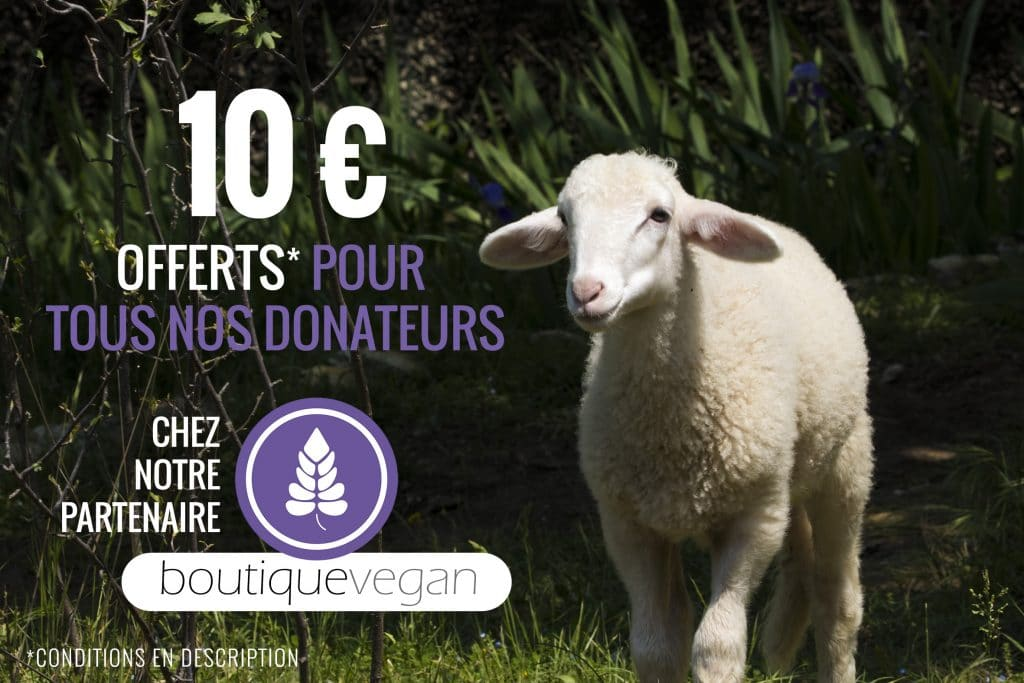 Reduction chez la Boutique Vegan